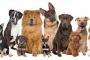 ¿Los perros de cualquier raza se pueden entrenar?