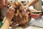 ¿Alternativas de medicinas para perros?