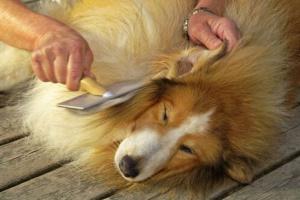 Cómo lidiar con el cabello enmarañado en tu perro o gato