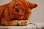 Ceguera repentina en gatos