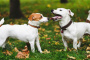 Socializar a tu cachorro