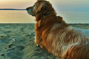 Explicación de la mielopatía degenerativa canina