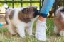 Entrenando a tu cachorro y lidiando con problemas de cachorro