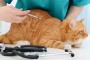 ¿Existen alternativas a la insulina para un gato diabético?