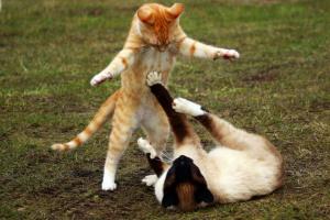 Diagnóstico de problemas de comportamiento en gatos