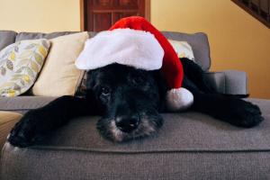 El disfraz de Navidad de tu mascota podría ser inconveniente