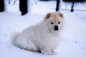 Parásitos respiratorios en perros
