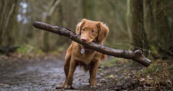Pérdida de movimiento corporal en perros