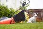 Cortacéspedes Seguridad y mascotas: lo que los propietarios necesitan saber.