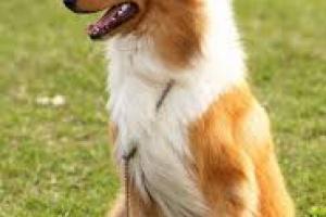 Cavidad formada debajo del diente en perros