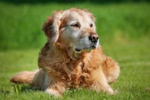 Todo lo que debe saber sobre las reacciones alérgicas en los perros