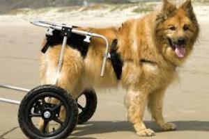 Displasia de cadera canina: la cirugía no es la única opción