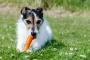 ¿Pueden los perros comer tomates, zanahorias, apio y otras verduras?