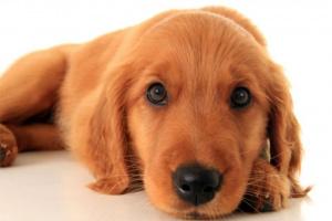 Su cachorro: 12-16 meses