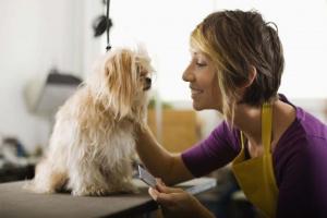 Consejos para la preparación de mascotas