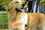 Cómo determinar cuándo un perro de servicio está trabajando