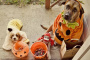 Juegos para perros en halloween