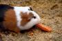 Evite que usted y su mascota contraigan infecciones por Salmonella