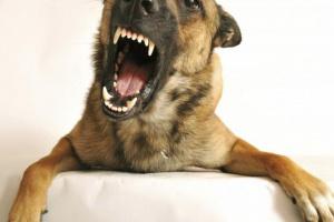 Cómo detener el comportamiento agresivo en los perros