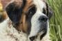 Deficiencia de Taurina en Perros: Síntomas, Causas y Tratamientos.