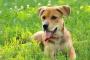 Tratar a un perro con glándulas anales hiperactivas