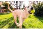 California es oficialmente el primer estado en prohibir las fábricas de cachorros con una nueva ley confirmada esta semana y los amantes de los animales están encantados con las noticias