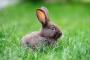 Pérdida de peso y músculo en conejos