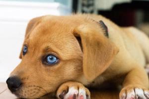 Posibles problemas ortopédicos congénitos en un perro de 2 años