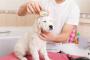Consejos de bricolaje para preparar un perro en casa