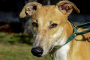 5 razas de perros hablan sobre por qué a menudo terminan en refugios de animales y con grupos de rescate