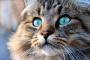 El afecto de los gatos conduce a amasar dolorosamente