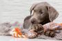 Viajar con perros: 8 cosas para empacar para un viaje por carretera con su cachorro