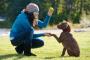 10 consejos que hacen que el entrenamiento del perro sea más fácil