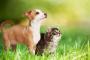 Diferencias en la alimentación de perros y gatos