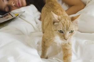 Cómo evitar que su gato lo despierte en la noche