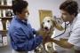 Tumor cerebral (astrocitoma) en perros