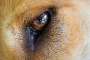 Infección ocular en perros recién nacidos