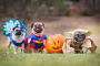 Ideas de disfraces de perros hechos en casa