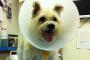 Esterilización y castración de mascotas