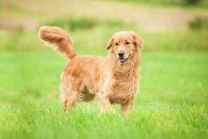 Su perro tiene miedo de dejarlo fuera de su vista?