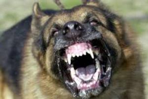 Síntomas de rabia en perros