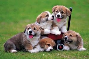 5 signos de demencia en perros