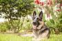 Presión arterial alta en perros