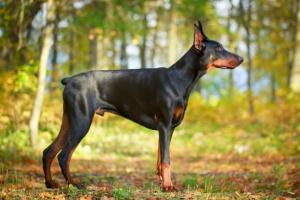 Espasmo de las patas traseras en los perros