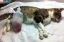 Anemia debida a insuficiencia (o toxicidad) de la médula ósea en gatos