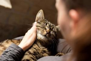 ¿Es un gato una buena opción para usted?
