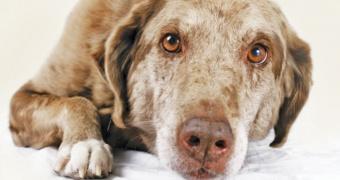 15 Signos de que su perro tiene dolor