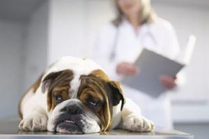 Tratamiento de la insuficiencia renal aguda en perros y gatos