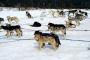 Perros de trineo: Entrevista con el director Fern Levitt