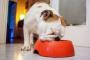 5 Trastornos de la alimentación que afectan a los perros.